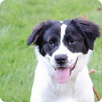 Adopt A Pet :: Sadie - Lebanon, CT