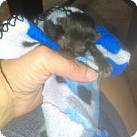 Adopt A Pet :: Rey - Garland, TX