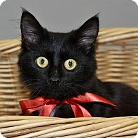 Adopt A Pet :: LEOPOLD - Lakeland, FL