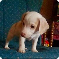 Adopt A Pet :: Peanut - Fort Wayne, IN