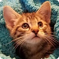 Adopt A Pet :: Noah - Colfax, IA