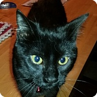 Adopt A Pet :: Shyla - Woodstock, ON