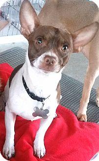 Small Dog Rescues In Phoenix Az