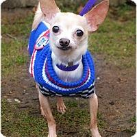 Adopt A Pet :: Vinny - Huntington, NY