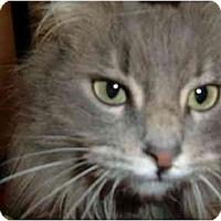 Adopt A Pet :: Bristol - No.Charleston, SC
