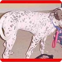 Adopt A Pet :: Brown Betty - Milwaukee, WI