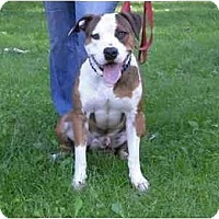 Adopt A Pet :: Cain - Chicago, IL