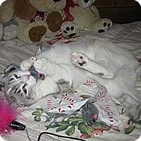 Adopt A Pet :: Candy Joy - Poway, CA