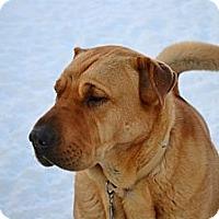 Adopt A Pet :: Windsor - Rigaud, QC
