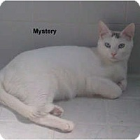 Adopt A Pet :: Mystery - Jacksonville, FL