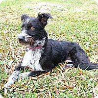 Adopt A Pet :: Helen - Mocksville, NC