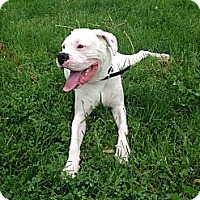 Adopt A Pet :: Happy Gilmore - Dayton, OH