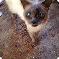 Adopt A Pet :: Simon - East McKeesport, PA