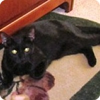 Adopt A Pet :: Liam - Lebanon, PA