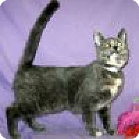 Adopt A Pet :: Renoire - Powell, OH