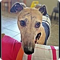 Adopt A Pet :: Jilly Bean - Geneva, OH