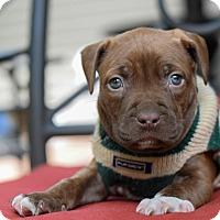 Adopt A Pet :: Cameaux - Baton Rouge, LA