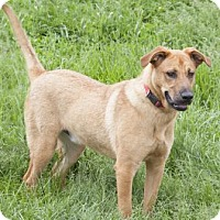 Adopt A Pet :: Kolby - Bedford, IN
