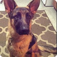 Adopt A Pet :: Rex - Dripping Springs, TX