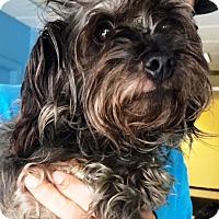 Adopt A Pet :: Sage - Oswego, IL