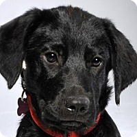 Adopt A Pet :: Coleby - Nanuet, NY