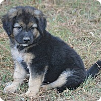 Adopt A Pet :: Hobi - Glastonbury, CT