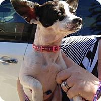 Adopt A Pet :: Maya - Matthews, NC