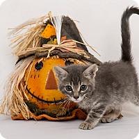 Adopt A Pet :: Fiyero - Riverside, CA