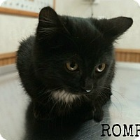 Adopt A Pet :: Romeo - Valley City, ND