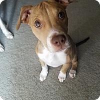 Adopt A Pet :: Penny - Albuquerque, NM
