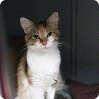 Adopt A Pet :: Farrah - Paducah, KY