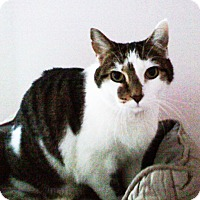 Adopt A Pet :: L.B. Lil Boy - N. Billerica, MA