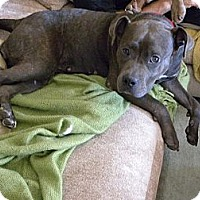 Adopt A Pet :: Kira - Culver City, CA