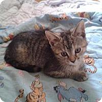 Adopt A Pet :: Nova - Acme, PA