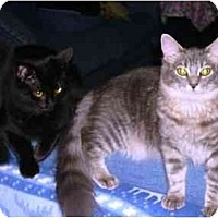 Adopt A Pet :: Eve & Flora - Irvine, CA