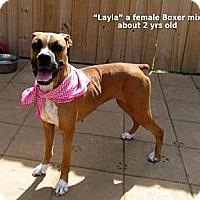 Adopt A Pet :: Layla - Gadsden, AL