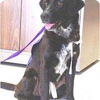 Adopt A Pet :: Tiger Lily - Richmond, VA