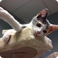 Adopt A Pet :: Chynna - Byron Center, MI