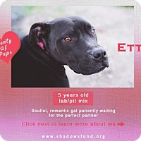 Adopt A Pet :: Miss Etta James - Lompoc, CA