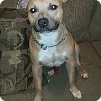 Adopt A Pet :: Hercules - Copperas Cove, TX