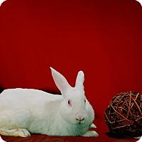 Adopt A Pet :: Mariah - Marietta, GA