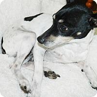 Adopt A Pet :: Mona - Umatilla, FL