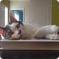 Adopt A Pet :: Monkey - Alexandria, VA
