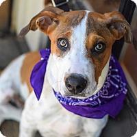 Adopt A Pet :: Archie - Baton Rouge, LA
