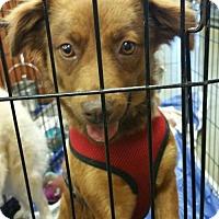Adopt A Pet :: Lexie - Pembroke, GA