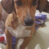 Adopt A Pet :: Hazel - Humble, TX