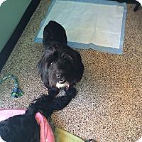 Adopt A Pet :: Brooks - Thousand Oaks, CA