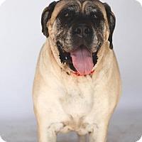Adopt A Pet :: Grace - Goodyear, AZ