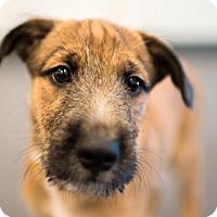 Adopt A Pet :: Peanut Butter is Reserved - Kirkland, QC