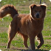 Adopt A Pet :: Boomer - Lebanon, MO